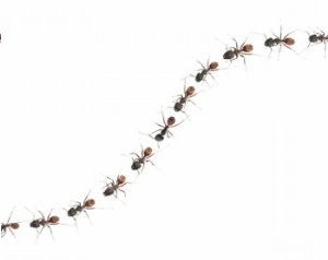 ants-marching.jpg