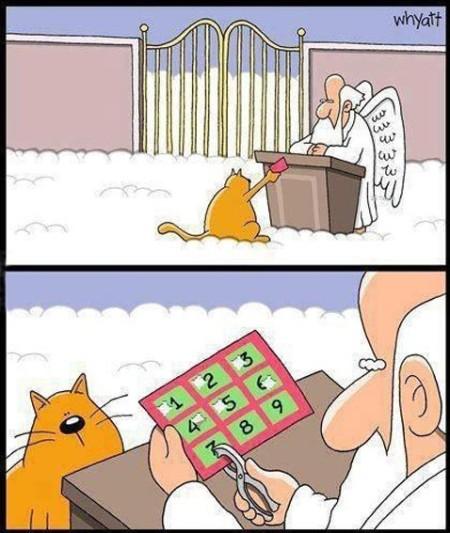 funny-cat-9-lives-heaven