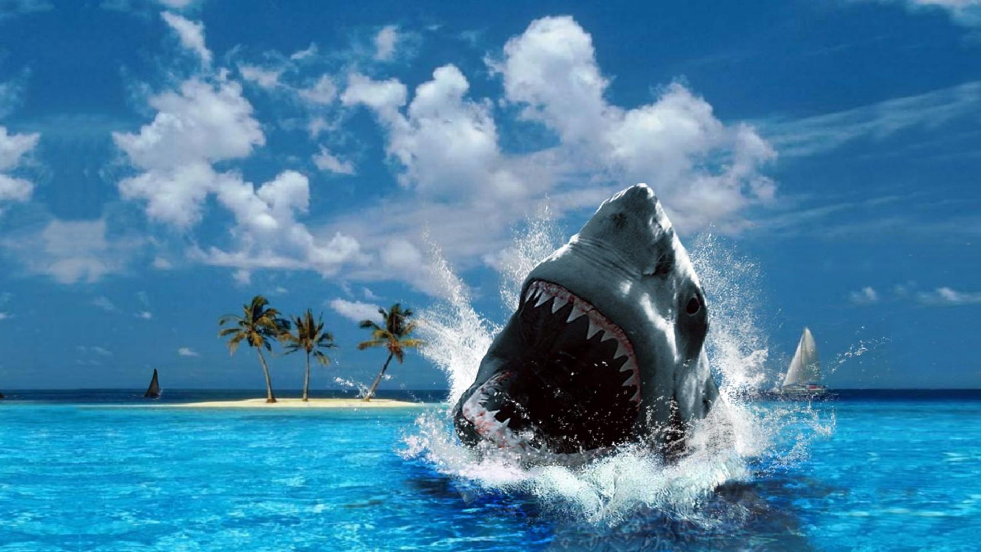 Лучшие обои для рабочего стола акула