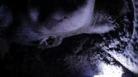 crawl-or-die-horror-review (2)