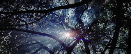 Image-9-Sun-through-trees-The-Thin-Red-Line